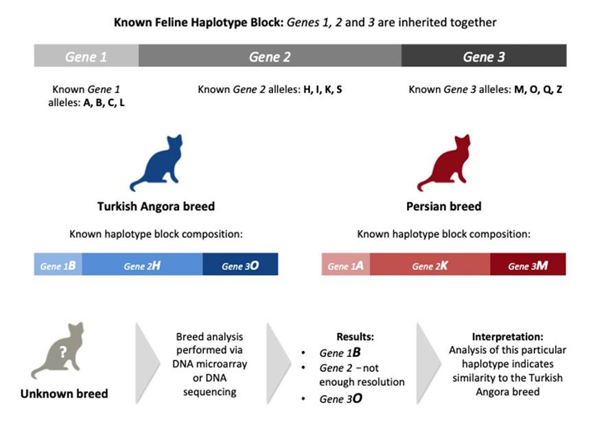 Cats Genomic Sequencing